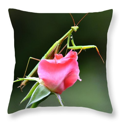 Praying Mantis Throw Pillow featuring the photograph Praying Mantis 2 by Noah Cole
