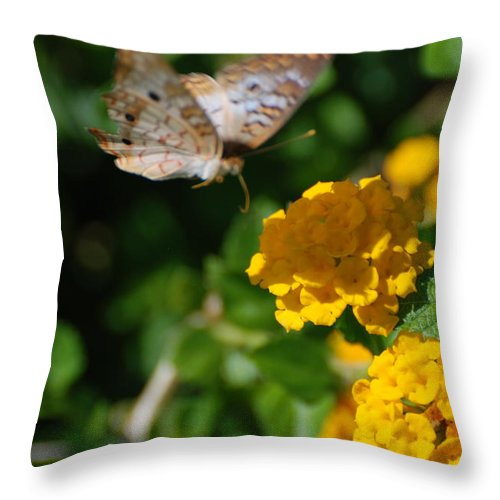 Butterfly Throw Pillow featuring the photograph Pre Landing by Rob Hans