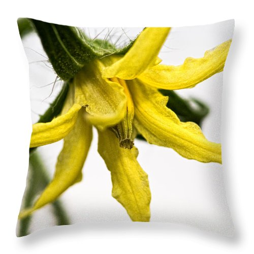 Tomato Throw Pillow featuring the photograph Pre-tomato by Christopher Holmes