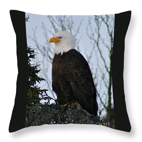 Eagle Throw Pillow featuring the photograph Predator Profile by Rick Monyahan