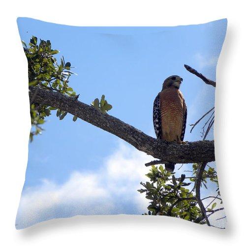 Hawk Throw Pillow featuring the photograph Predator by Terri Mills