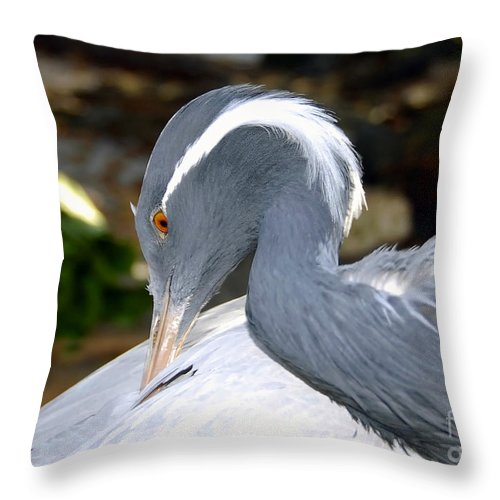 Bird Throw Pillow featuring the photograph Preening Bird by David Lee Thompson