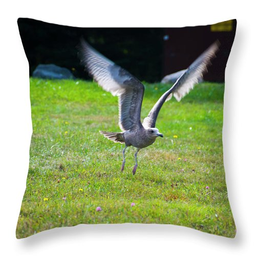 Bird Wildlife Nature Green Grass Blacks Throw Pillow featuring the photograph Prepare For Landing by Bar Kaufman