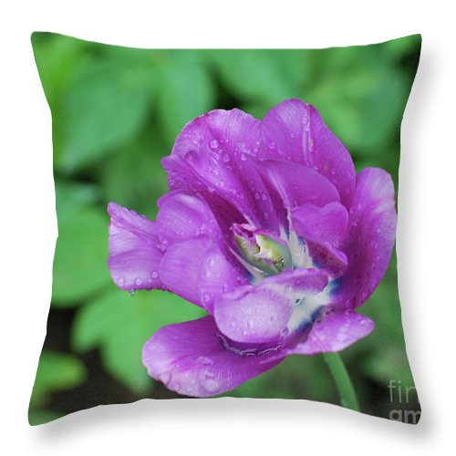 Tulip Throw Pillow featuring the photograph Pretty Flowering Purple Parrot Tulip In A Garden by DejaVu Designs