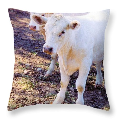 Animals Throw Pillow featuring the photograph Pretty Girls by Jan Amiss Photography