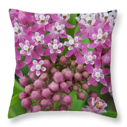 Nature Throw Pillow featuring the photograph Pretty In Pink by Peggy King