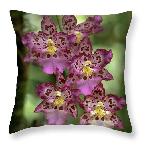 Orchids Throw Pillow featuring the photograph Pretty In Pink by Susan Rissi Tregoning