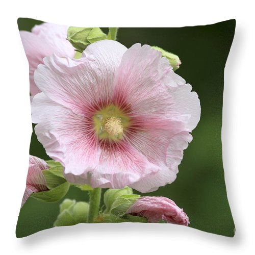 Flower Throw Pillow featuring the photograph Pretty In Pink by Teresa Zieba