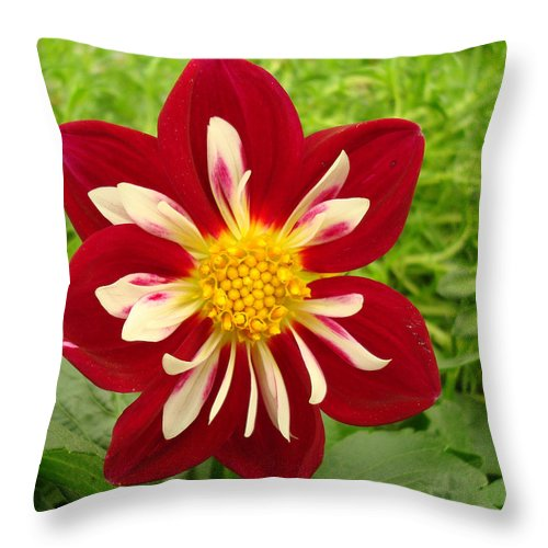 Kathy Bucari Throw Pillow featuring the photograph Pretty In Red by Kathy Bucari