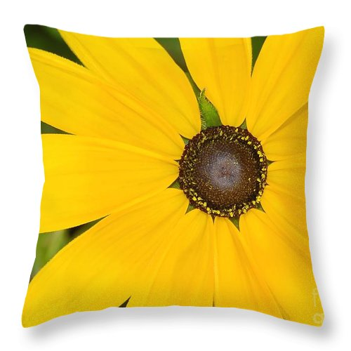 Yellow Flower Throw Pillow featuring the photograph Pretty In Yellow by David Lee Thompson