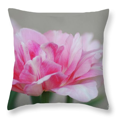Tulip Throw Pillow featuring the photograph Pretty Pale Pink Parrot Tulip Flower Blossom by DejaVu Designs