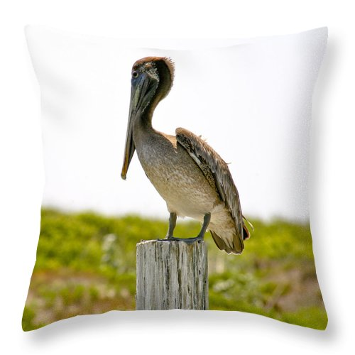 Pelican Throw Pillow featuring the photograph Pretty Pelican by Marilyn Hunt