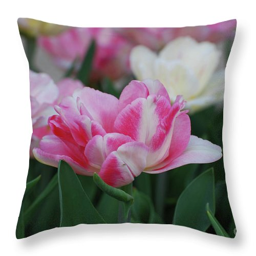 Tulip Throw Pillow featuring the photograph Pretty Pink And White Striped Ruffled Parrot Tulips by DejaVu Designs