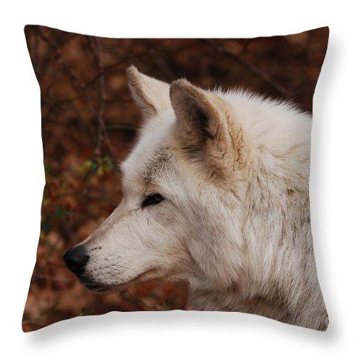 Wolf Throw Pillow featuring the photograph Pretty Profile by Lori Tambakis