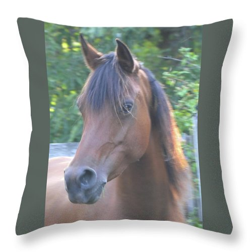 Horse Throw Pillow featuring the photograph Pretty Profile by Michael Barry