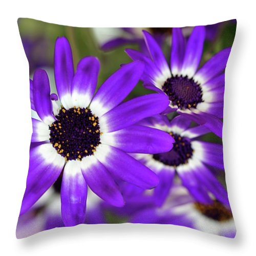 Flower Throw Pillow featuring the photograph Pretty Purple Daisies by Sabrina L Ryan