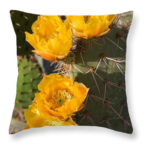 Cactus Throw Pillow featuring the photograph Prickly Pear Cactus Flowers by Jill Reger