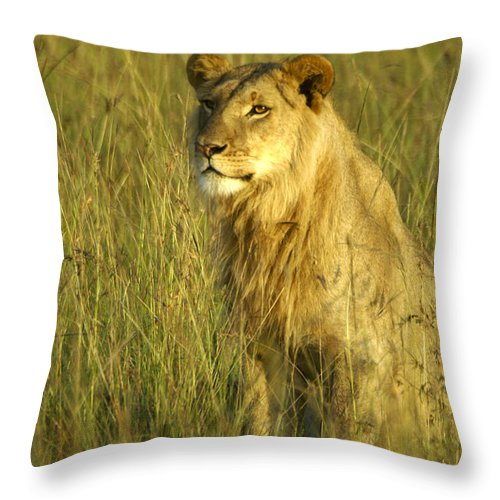Africa Throw Pillow featuring the photograph Princely Lion by Michele Burgess