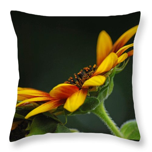 Sunflower Throw Pillow featuring the photograph Profile In Sunshine by Michelle Hastings