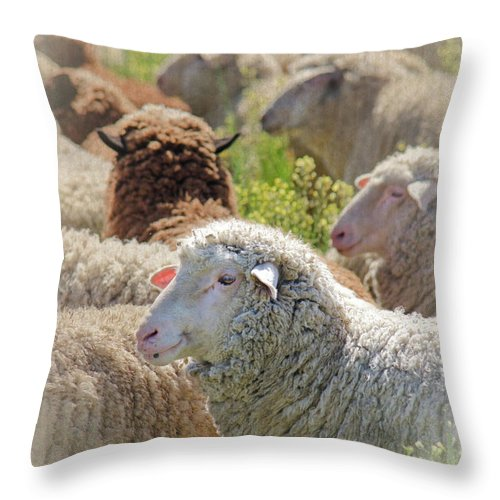 Sheep Throw Pillow featuring the photograph Profile Of A Sheep by Darolanne Peterson