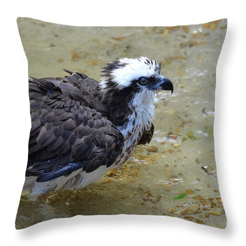 Osprey Throw Pillow featuring the photograph Profile Of An Osprey In Shallow Water by DejaVu Designs