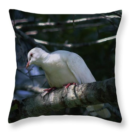 Animals Throw Pillow featuring the photograph Promise by Ella Kaye Dickey