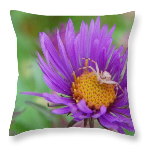 Nature Throw Pillow featuring the photograph Protecting His Turf by Peggy King