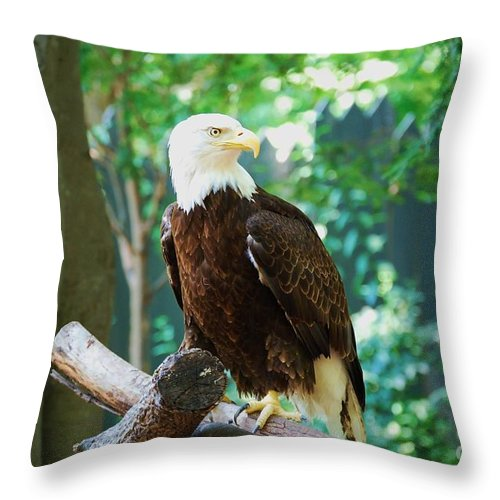 Wildlife Throw Pillow featuring the photograph Proud Eagle by Eric Liller