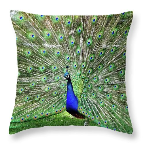 Bird Throw Pillow featuring the photograph Proud Peacock by Deborah England