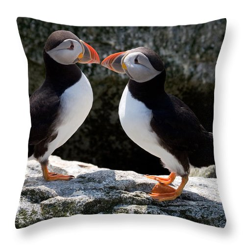 Puffin Throw Pillow featuring the photograph Puffin Love by Brent L Ander