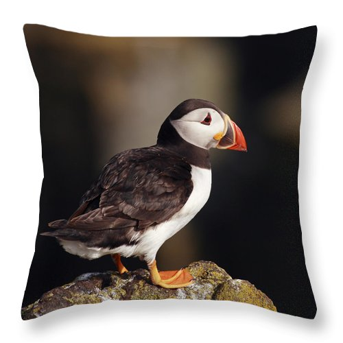 Puffin Throw Pillow featuring the photograph Puffin On Rock by Grant Glendinning