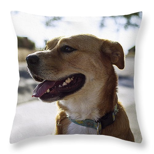Dog Art Throw Pillow featuring the painting Puppy Dog by Queso Espinosa