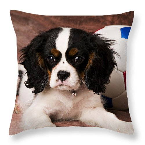 Puppy Dog Cute Doggy Domestic Pup Pet Pedigree Canine Creature Soccer Ball Throw Pillow featuring the photograph Puppy With Ball by Garry Gay