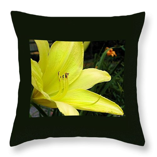 Fine Art Photography Throw Pillow featuring the photograph Pure Sunshine by Patricia Griffin Brett