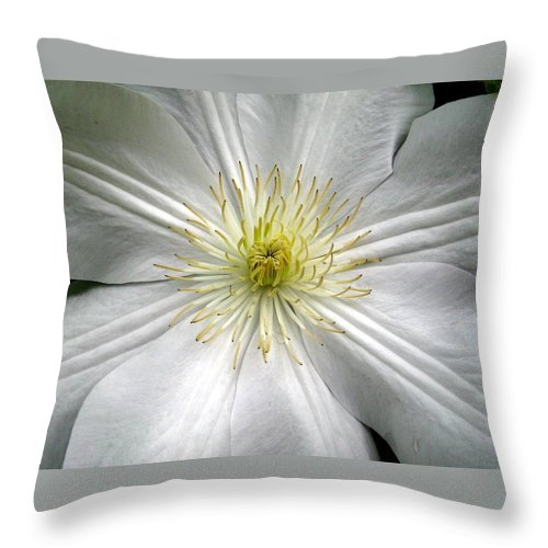 Clematis Throw Pillow featuring the photograph Purity by Marla McFall