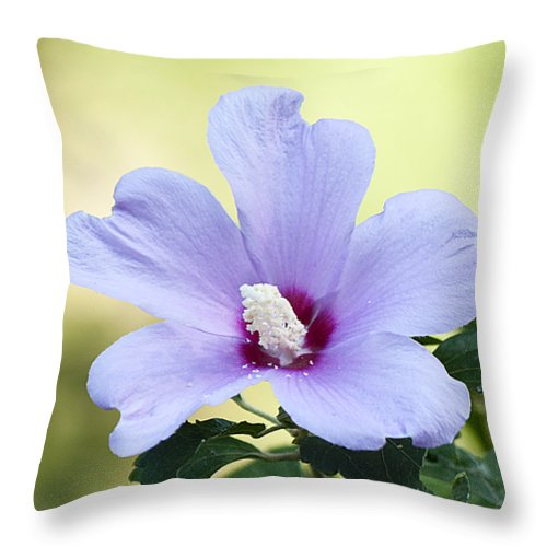 Nature Throw Pillow featuring the photograph Purple Althea by Kenneth Albin