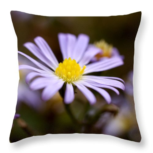 Purple Throw Pillow featuring the photograph Purple And Yellow Flower by Jessica Wakefield
