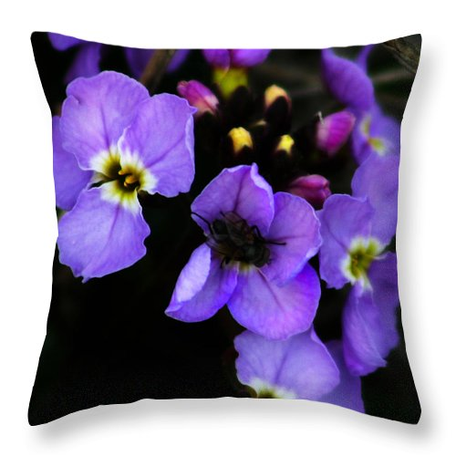 Flowers Throw Pillow featuring the photograph Purple Arctic Wild Flowers by Anthony Jones