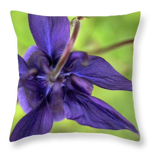 Purple Throw Pillow featuring the photograph Purple Beaut by Edmund Mazzola