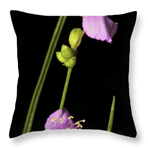 Purple Throw Pillow featuring the photograph Purple by Christopher Holmes