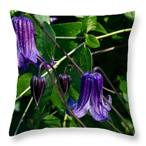 Clamatis Throw Pillow featuring the photograph Purple Clamatis Bells by Douglas Barnett
