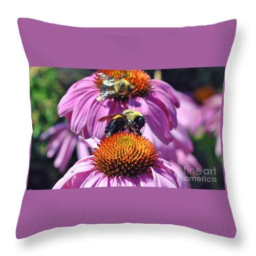 Flowers Throw Pillow featuring the photograph Purple Coneflower by Pam Schmitt