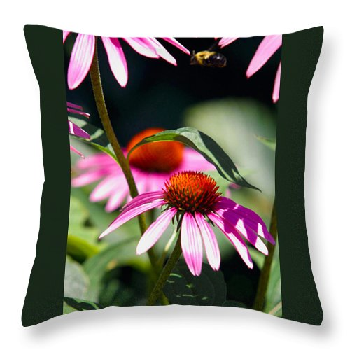 Bee Throw Pillow featuring the photograph Purple Cones And Honey Bees by Alan Look
