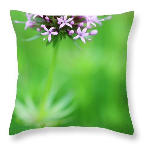 Phuopsis Stylosa Throw Pillow featuring the photograph Purple Crosswort Flower by Neil Overy