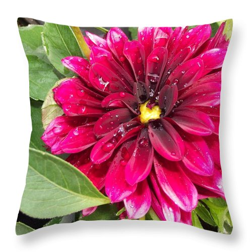 Purple Throw Pillow featuring the photograph Purple Dahlia by Pamela Pursel
