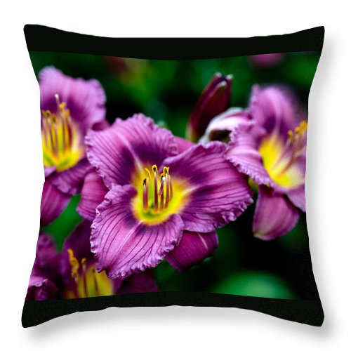 Flower Throw Pillow featuring the photograph Purple Day Lillies by Marilyn Hunt