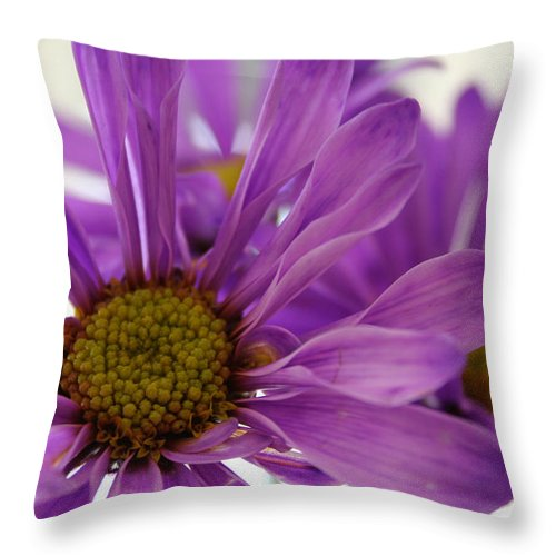Flowers Purple Macro Daisy Spring Yellow Digital Photography Throw Pillow featuring the photograph Purple Delight by Linda Sannuti