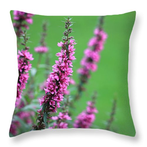 Purple Flowers Throw Pillow featuring the photograph Purple Flowers In A Field by Angela Murdock