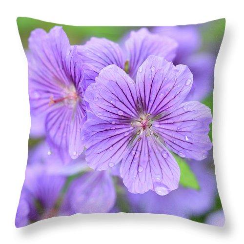 Geranium X Magnificum Throw Pillow featuring the photograph Purple Geranium by Neil Overy