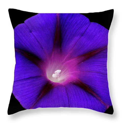 Flower Photos Throw Pillow featuring the photograph Purple Glory by Maria Ollman